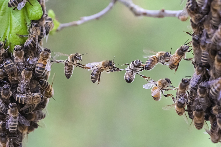 Even bees need team trust to accomplish anything
